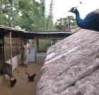 srilanka_geisterland_16
